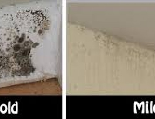 Musty Cupboards Mildew Smell Under Kitchen Cabinets Savae