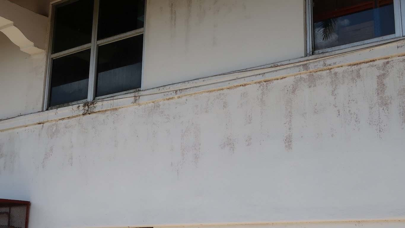 Exterior Mold Stain