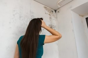 Mold Walls Management Humidity Panama