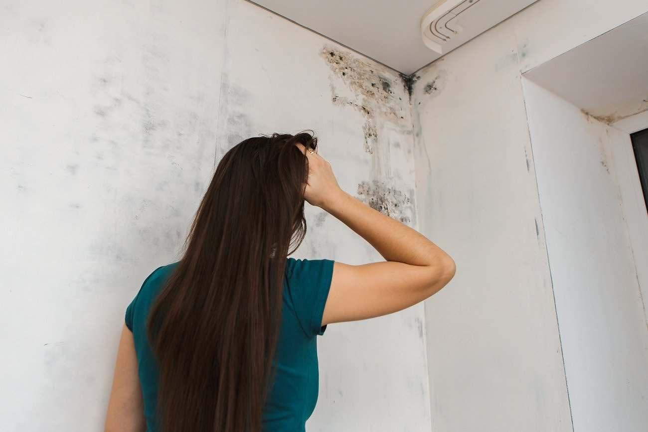 Mold Walls Management Humidity Panama